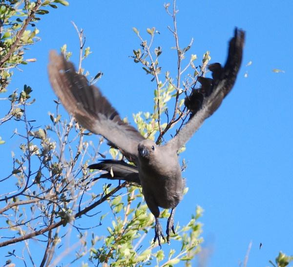 Go away bird in flight by peggyb