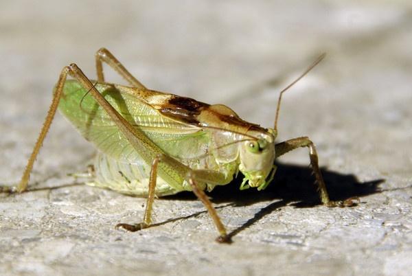 Cricketty crick by Hardwicke