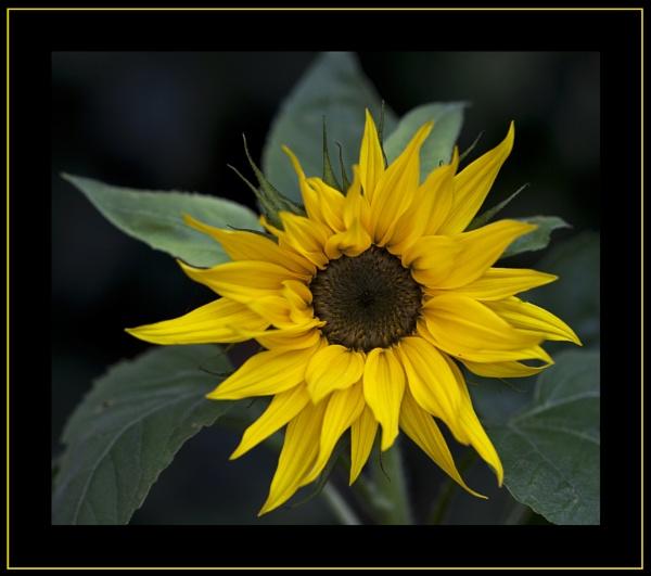 You Bring Me Sunshine... by fran_weaver