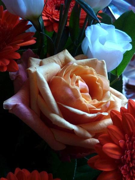 Flowers,,,,,  again by rolandb1952