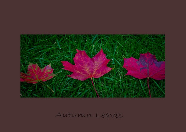 Autumn Leaves by shush