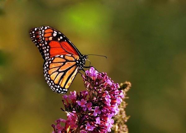 Butterfly by john_w168