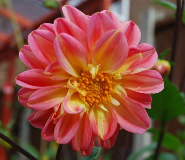 petals by whiteknight