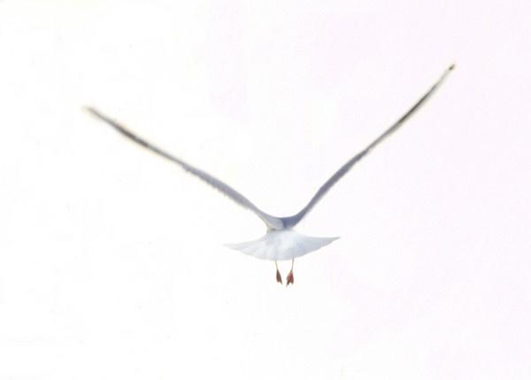 Flight by JayneL