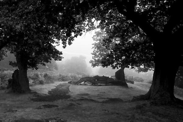 Misty Black & White by Stonemushroom