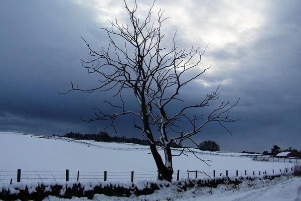 What a cool tree... by Jimbotha
