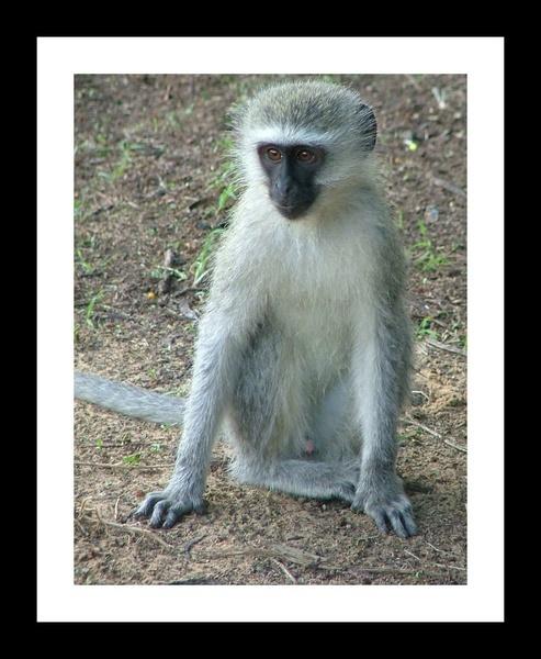 Monkey Portrait by Annien