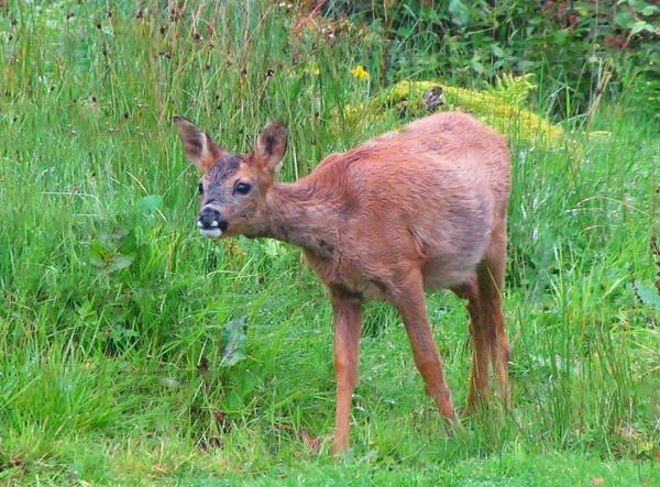 Dear Deer! by gingerdelight