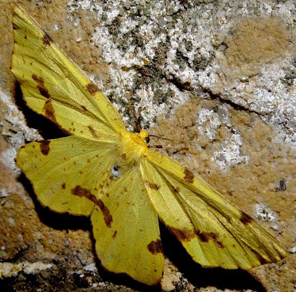 more entomologie by fotoboy