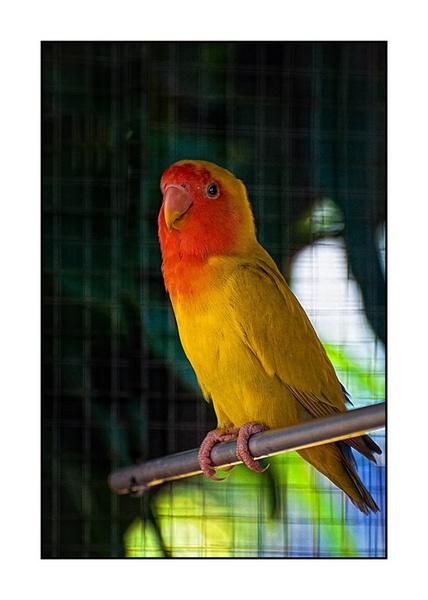 African Bird by Saigonkick