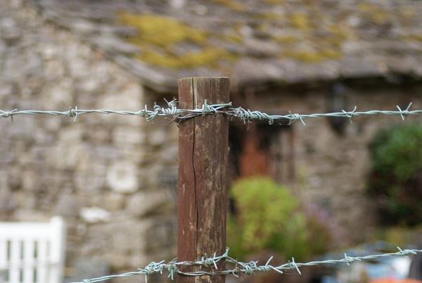 Wire by Gazsu