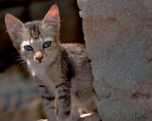 Lovely Eyes by Thushari