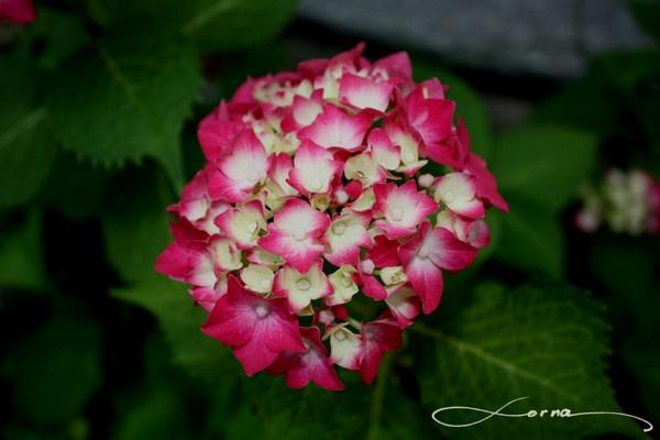 Flower by Trojan