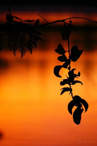 Autumn Dawn by LilyWren