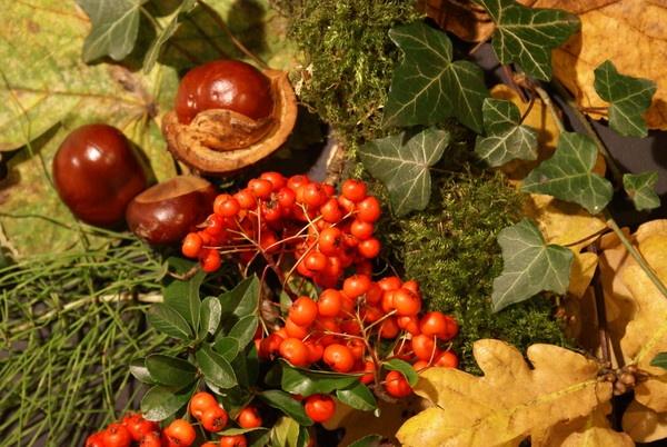 Autumn still life by rayjac