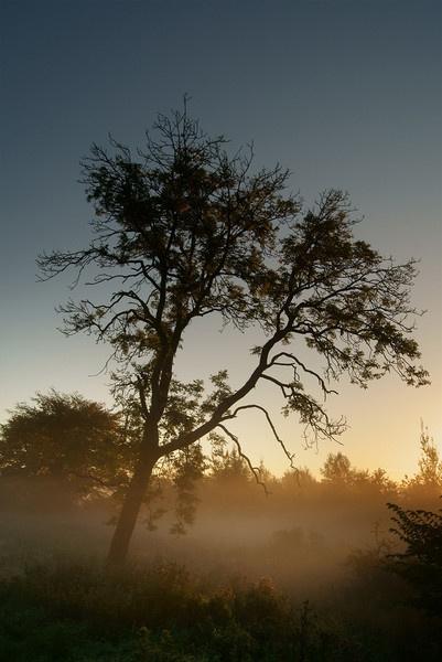 Misty Morning by bigwulliemc