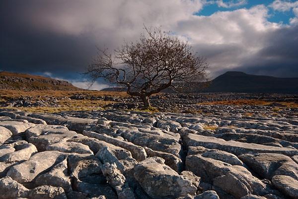 Twisleton Tree by Martin_Appleby