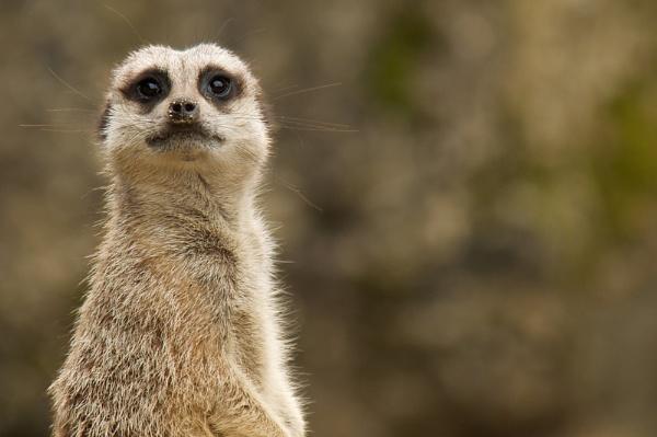 You talking to Me! by SpiroSpiteri