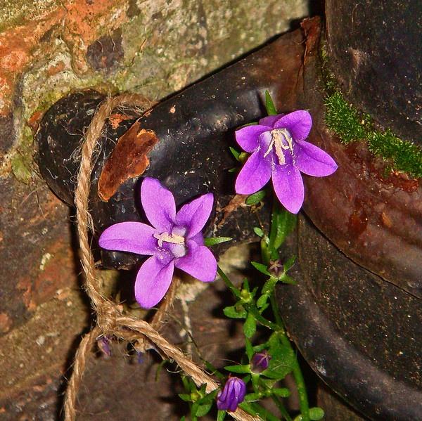 Purple D-rain by JordieJ