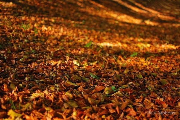 Golden Carpet by spottydog06