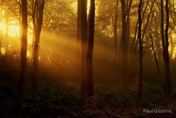 Autumn Rays by spottydog06