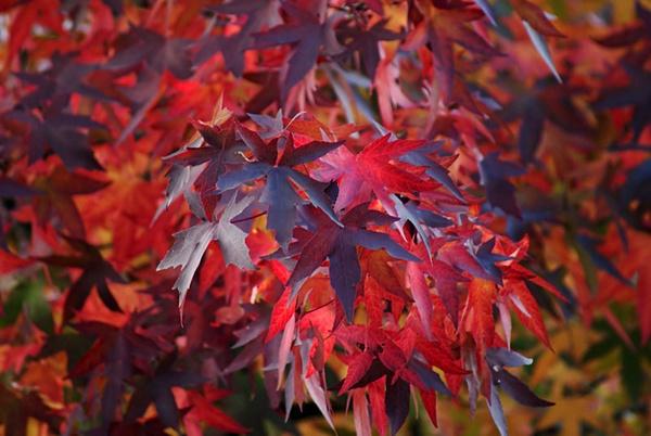 Autumn Colours by Bungabelandajr