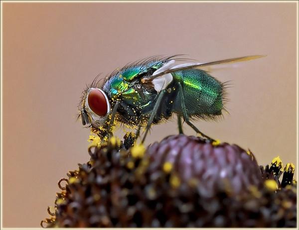 Pollen fix !! by bricurtis