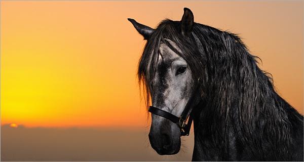 Sunset Grey by dathersmith