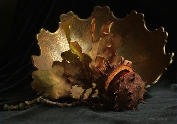 Autumn Still Life by helenlinda