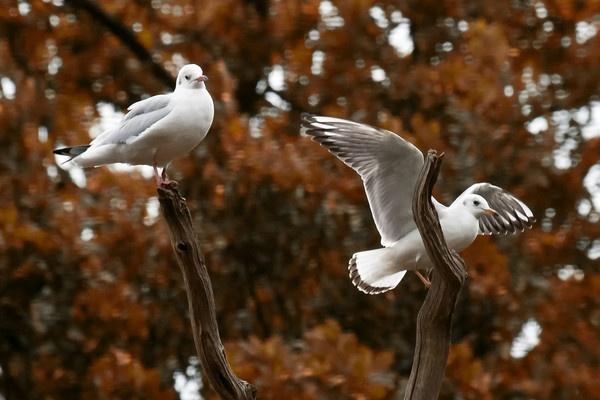 Gulls by ronan1