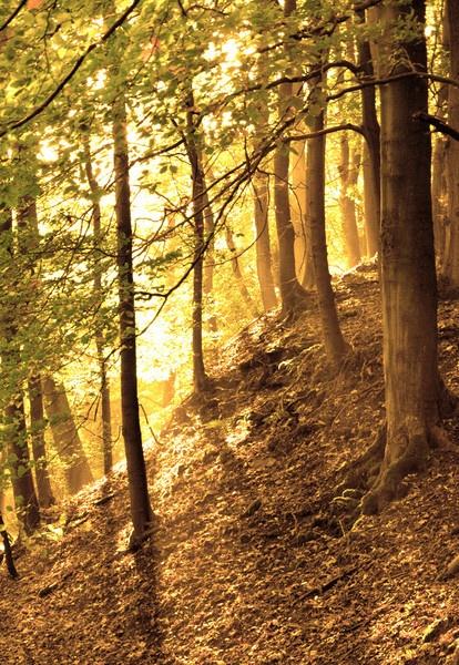 sunlight in the woods by Gavin_Duxbury