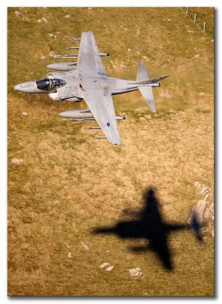 Harrier shadow by chompy9043