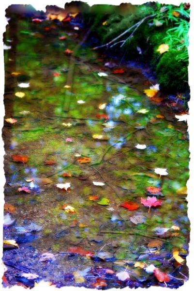 autumn by kazzy1963