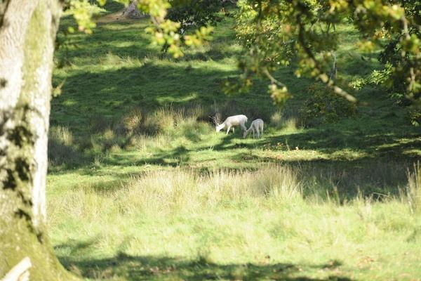 White Deer by trevmsklly