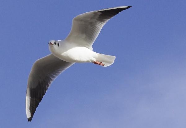 Gull by Pentaxpaul