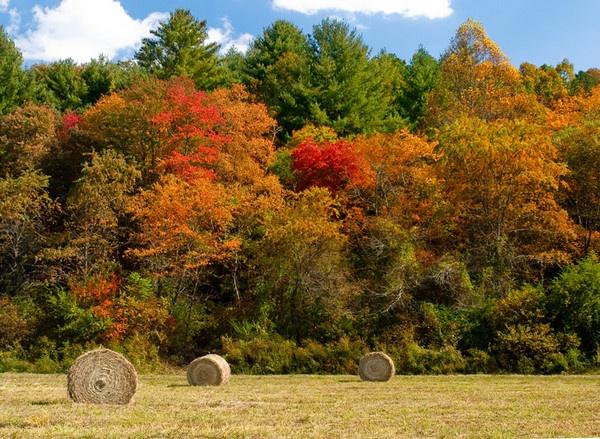 Fall Harvest by jbsaladino