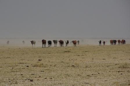 Desolation by Msalicat