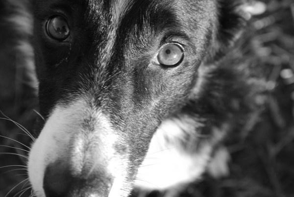 Cute dog by toniiixx