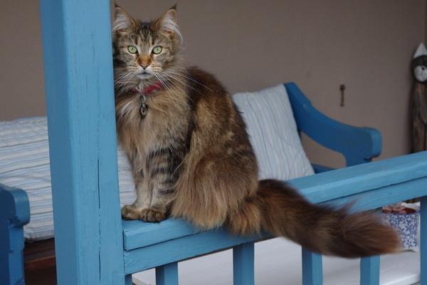 Photogenic cat by DPhillips
