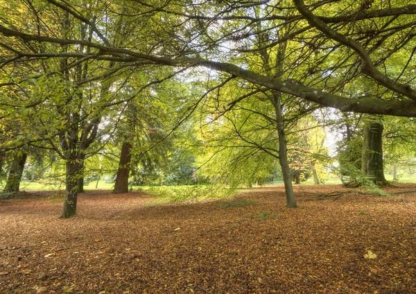 Autumn glory by JoHa