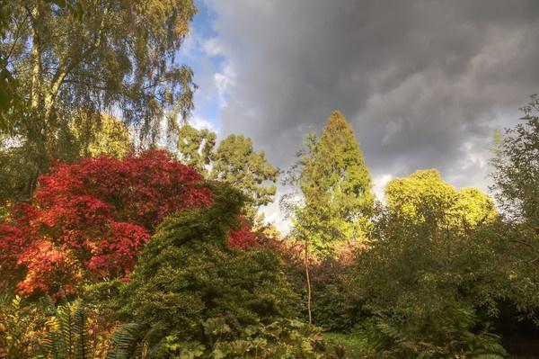 Autumn tints by JoHa