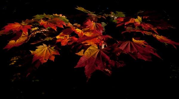 Colours of Westonbirt by Bryn_Jones
