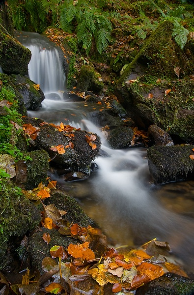 Autumn Stream by petejeff