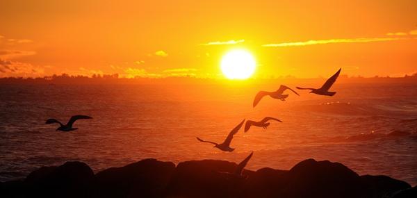 Sandgate Gulls by David_Cory