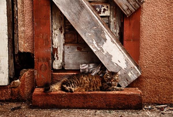 Accessorized Cat by gajewski