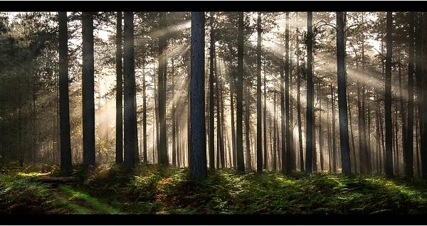 Woodland DeLight