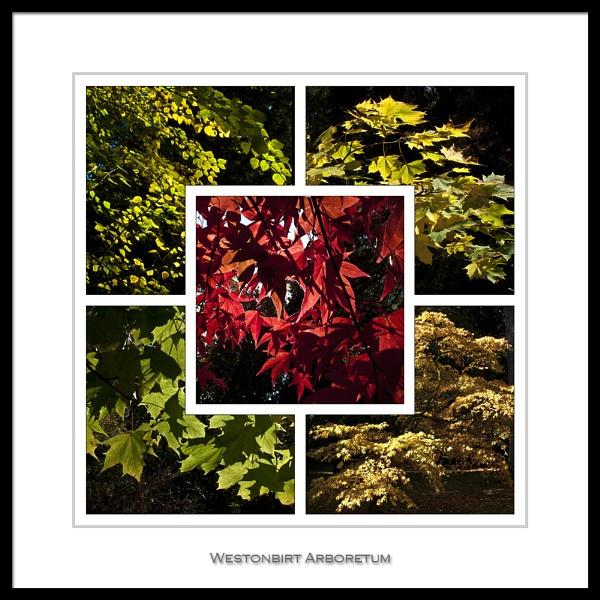 Westonbirt Arboretum by DiegoDesigns
