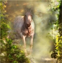 Through the Mists of Avalon
