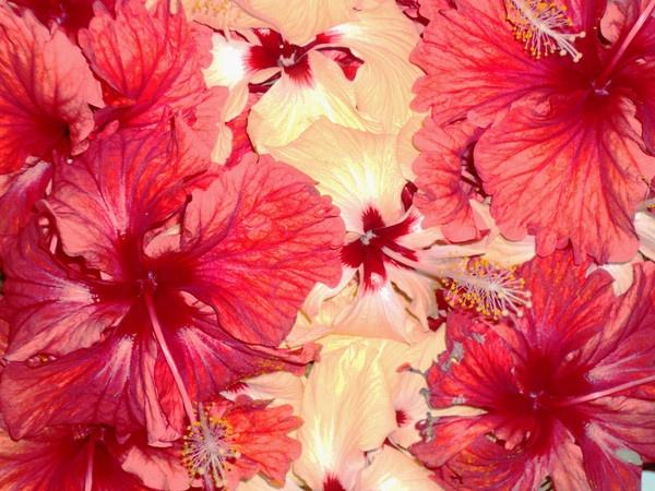 Bouquet by Anirban_ind