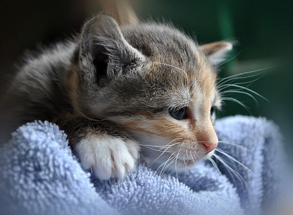 Sarah\'s kitten by 4evergold